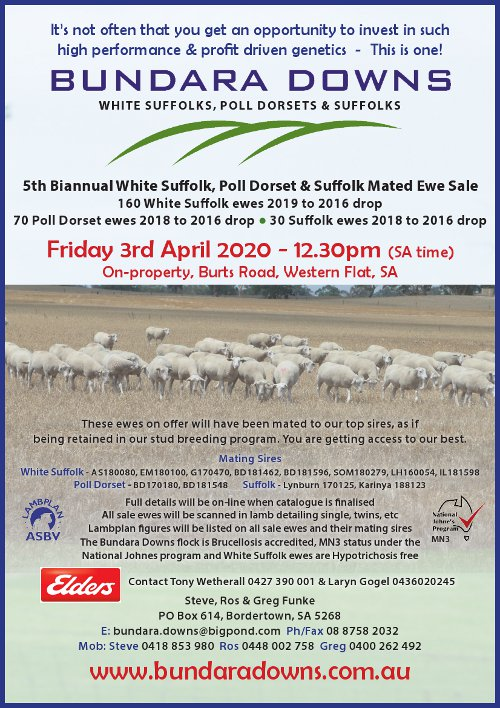 2020 Biannual Mated Ewe Sale