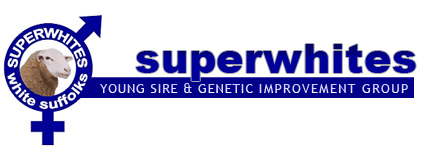 Superwhites - Young Sire & Genetic Improvement Group